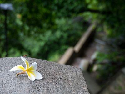 Sri Lanka Tempel, Reisfelder und Regenwald