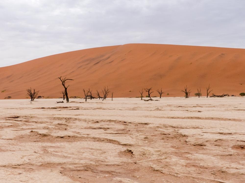 Namibia Wüste, Flüsse, Meer & Viecher